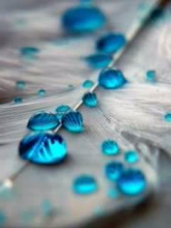 Картинка голубые капли на листе (blue drops on a leaf) 240x320 для смартфона