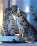 Картинка два серых котенка 128x160