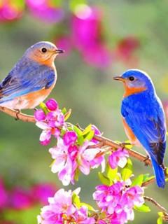 Картинка Lovely birds 240x320