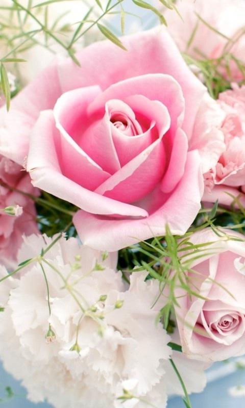 Картинка нежная роза 480x800