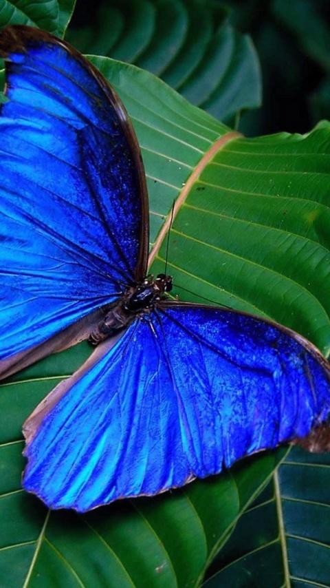 картинки бабочки на телефон