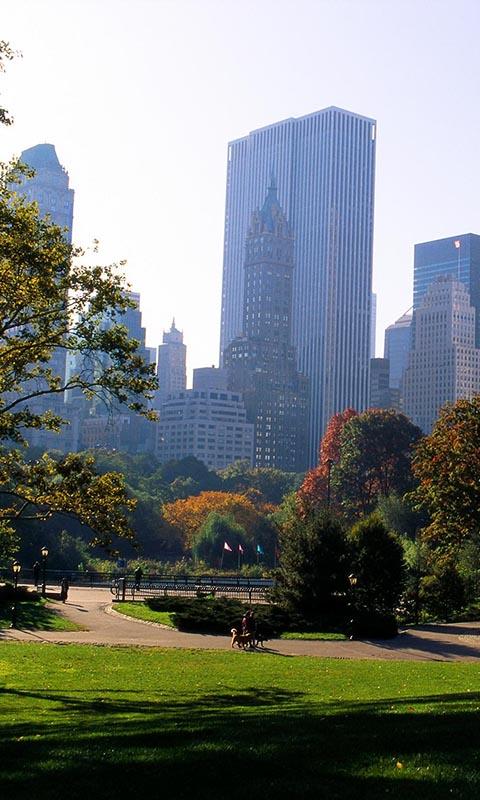 Картинка деревья, new york, usa, тропинки, тропинка, city, город, нью йорк, небоскребы, парк, park 480x800