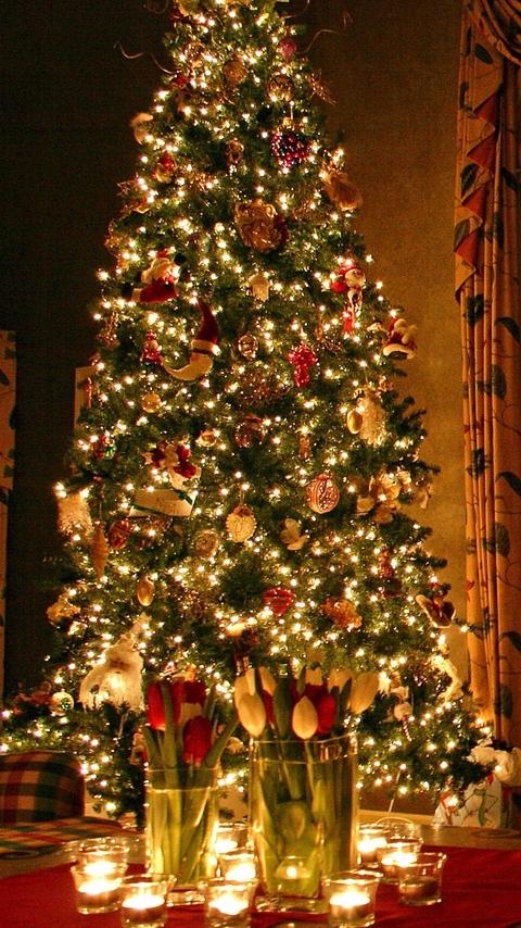 Елка, дом, новый год, праздник, цветы