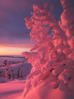 Зима, снежные деревья, закат