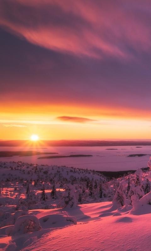 Зима, снежные деревья, снег, закат картинка